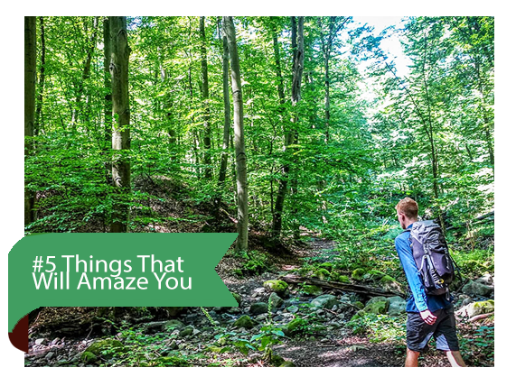 5 Things That Will Amaze You About The Nature of Hungary