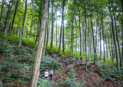 Hike Hungary - In the Beech Forest