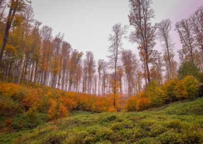 Autumn forest Hungary
