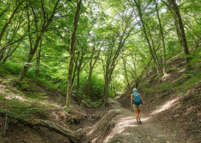 Hiking in the danube bend
